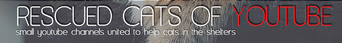 Cats for Charity